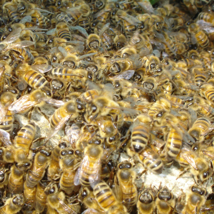 Bees